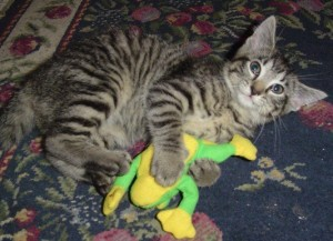 Anya the free kitten